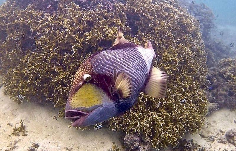 魚類|お魚図鑑