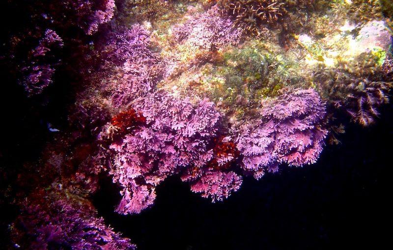 ユカリ|海の生物図鑑